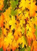 oktober-herfst